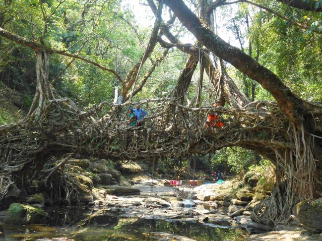 The Living Root Bridge, Meghalaya